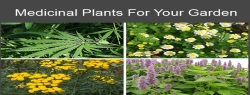 Medicinal Plants For Your Garden Featured